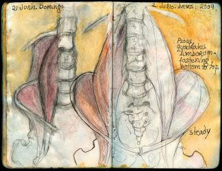 Psoas muscle for yoga
